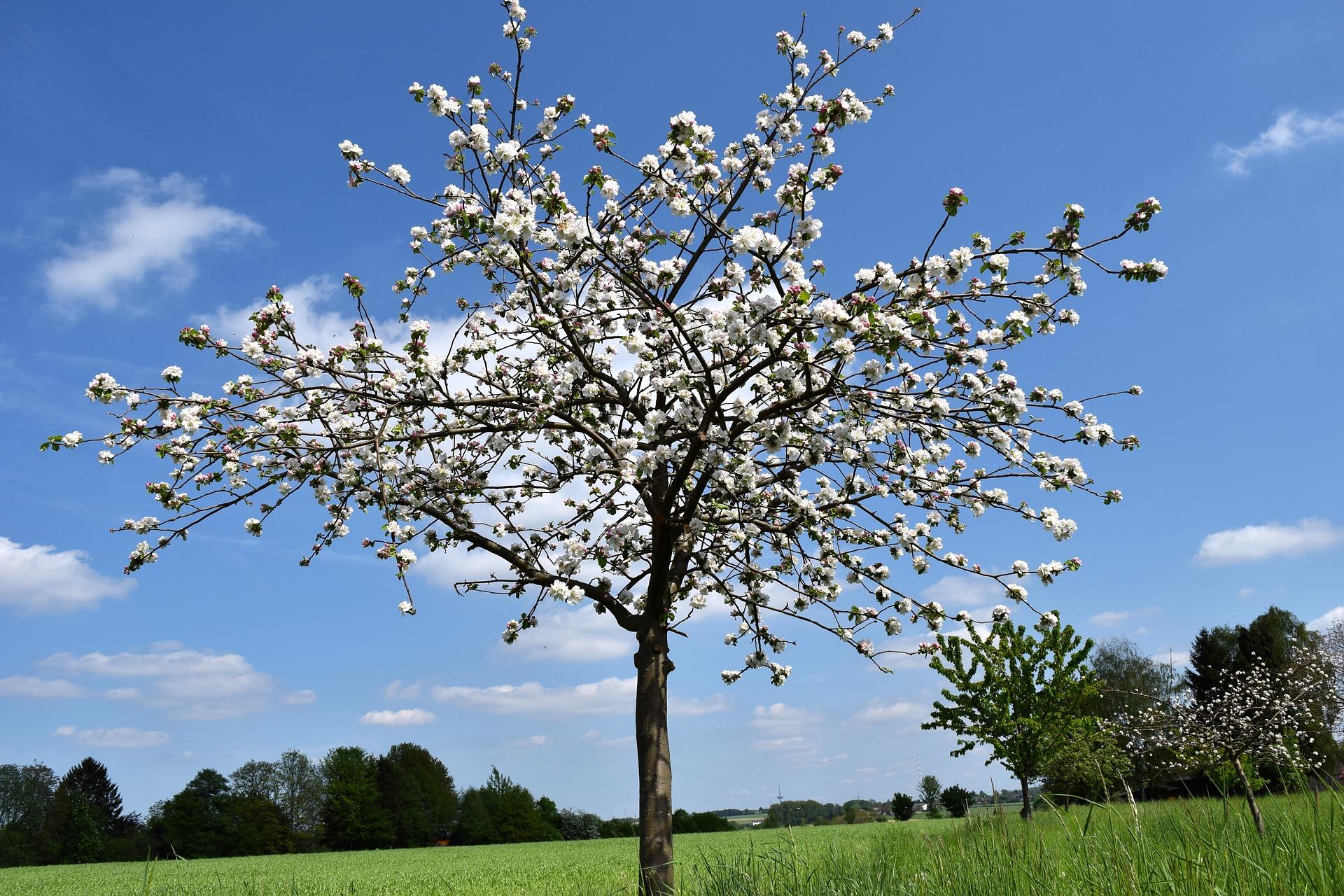 Wühlmauskorb für Bäume