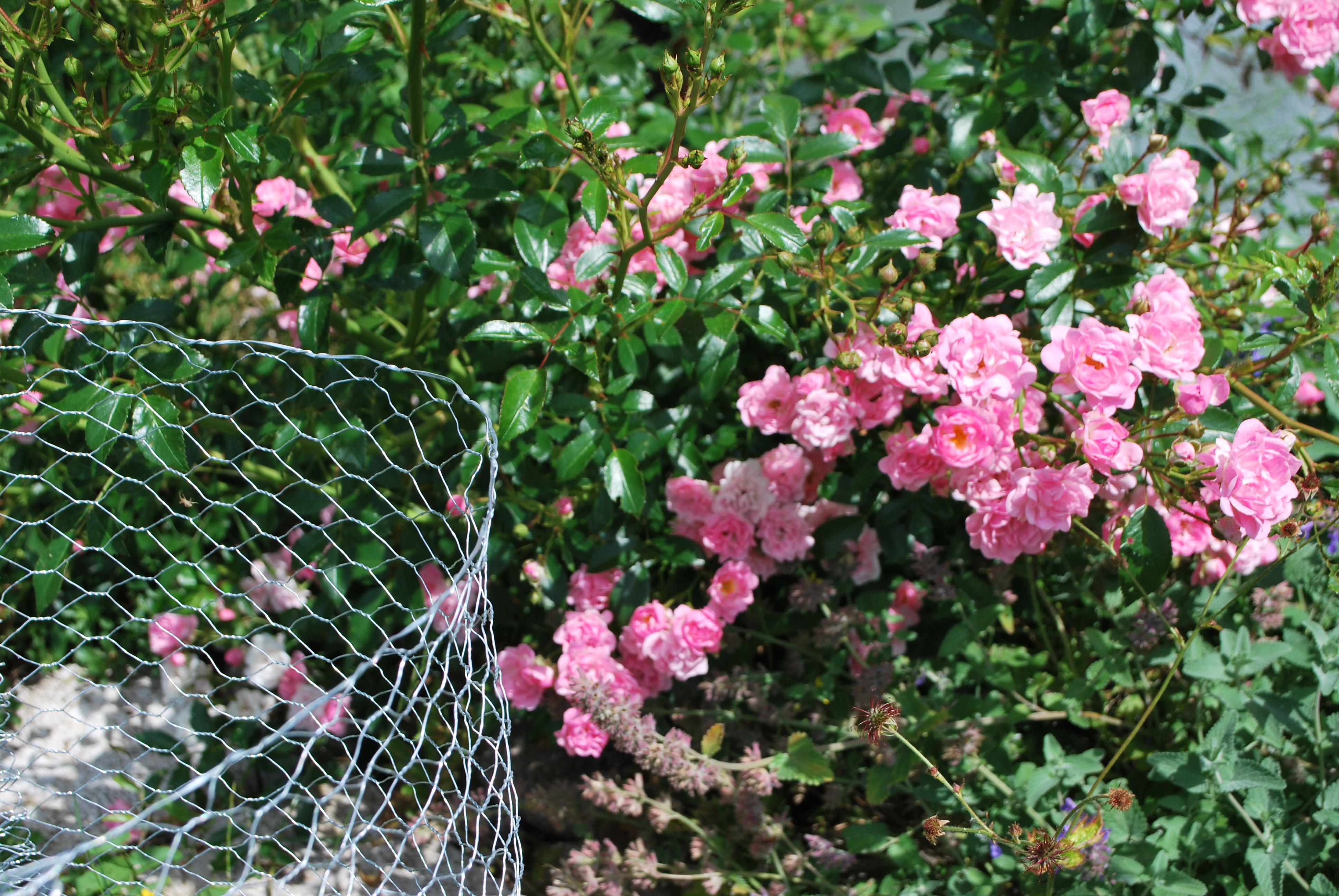 Wühlmauskorb für Rosen und Sträucher
