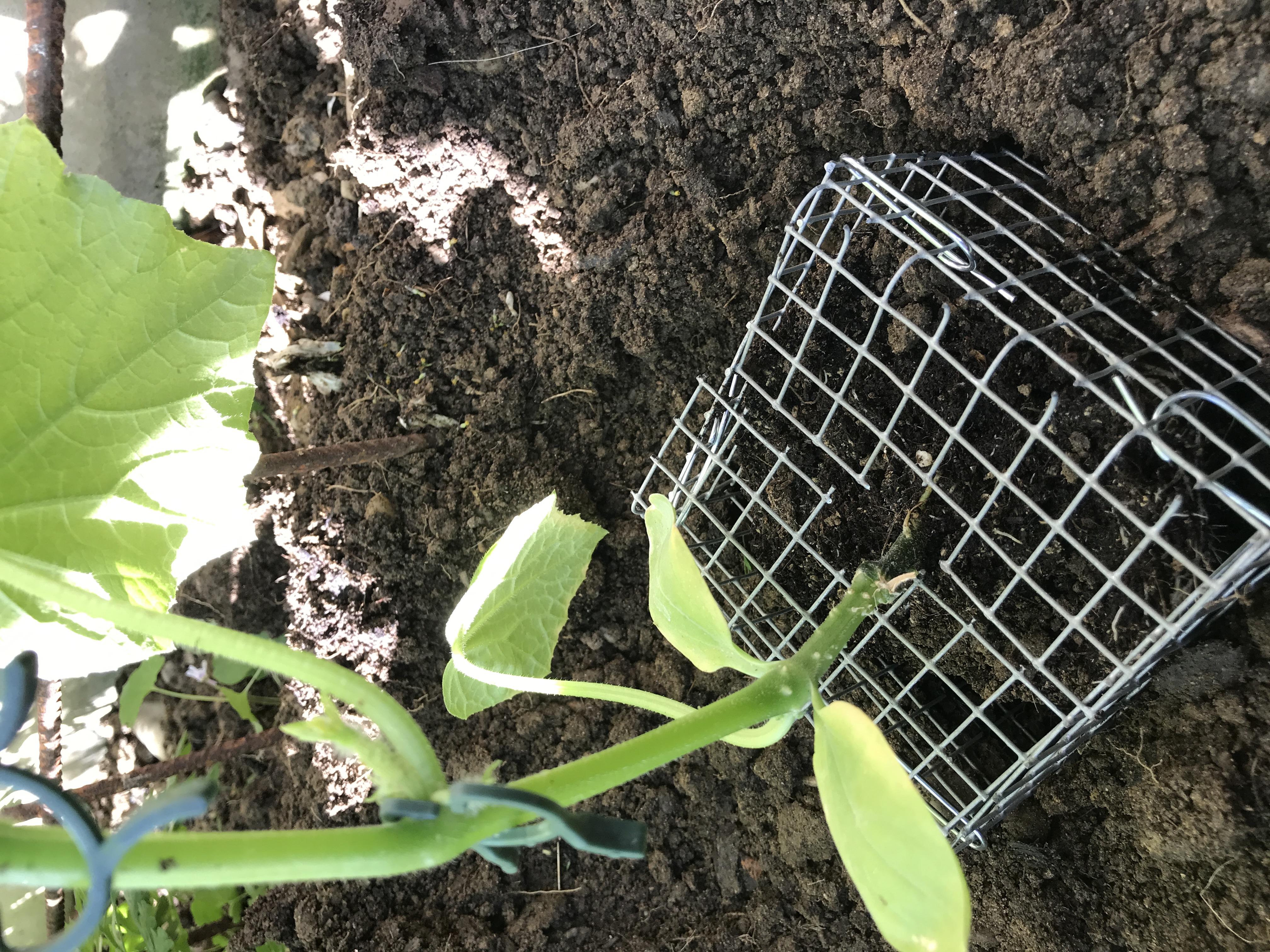 Wühlmauskörbchen für Gemüse und Blumen, 4 Stück